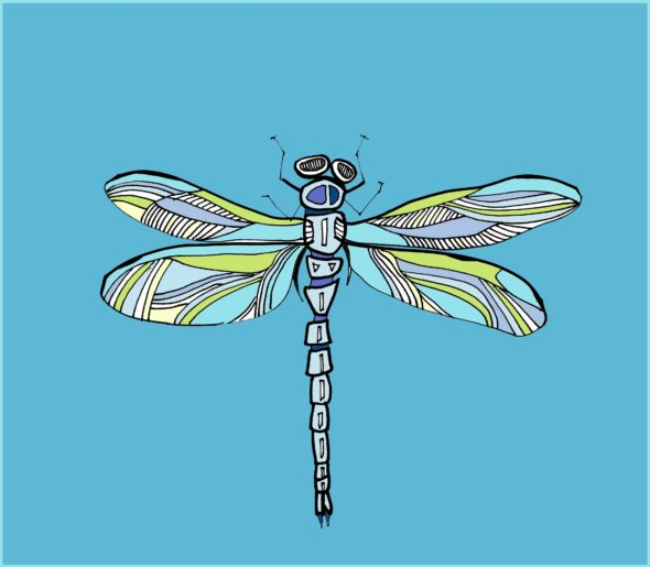 art every day number 46 illustration drawing dragonfly