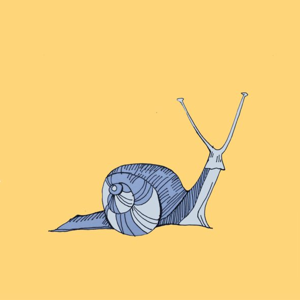 art every day number 99 snail escargot illustration drawing janet bright