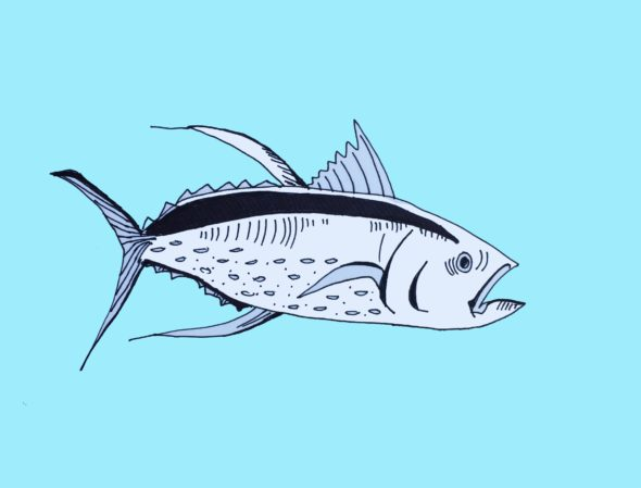 art every day number 119 illustration drawing big tuna