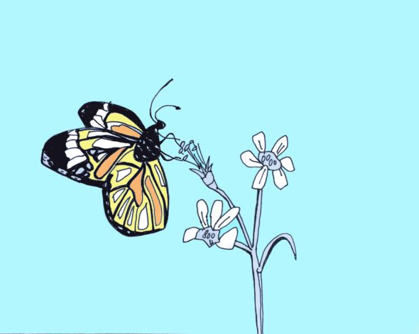 art every day number 141 butterfly drawing illustration