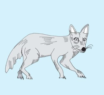 art every day number 171 illustration drawing animal arctic fox