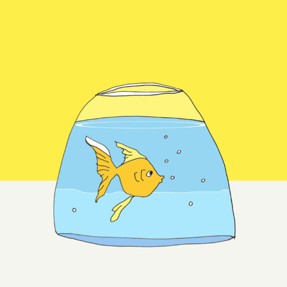 art every day number 215 fishbowl limitations
