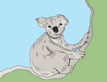 art every day number 211 illustration koala animal