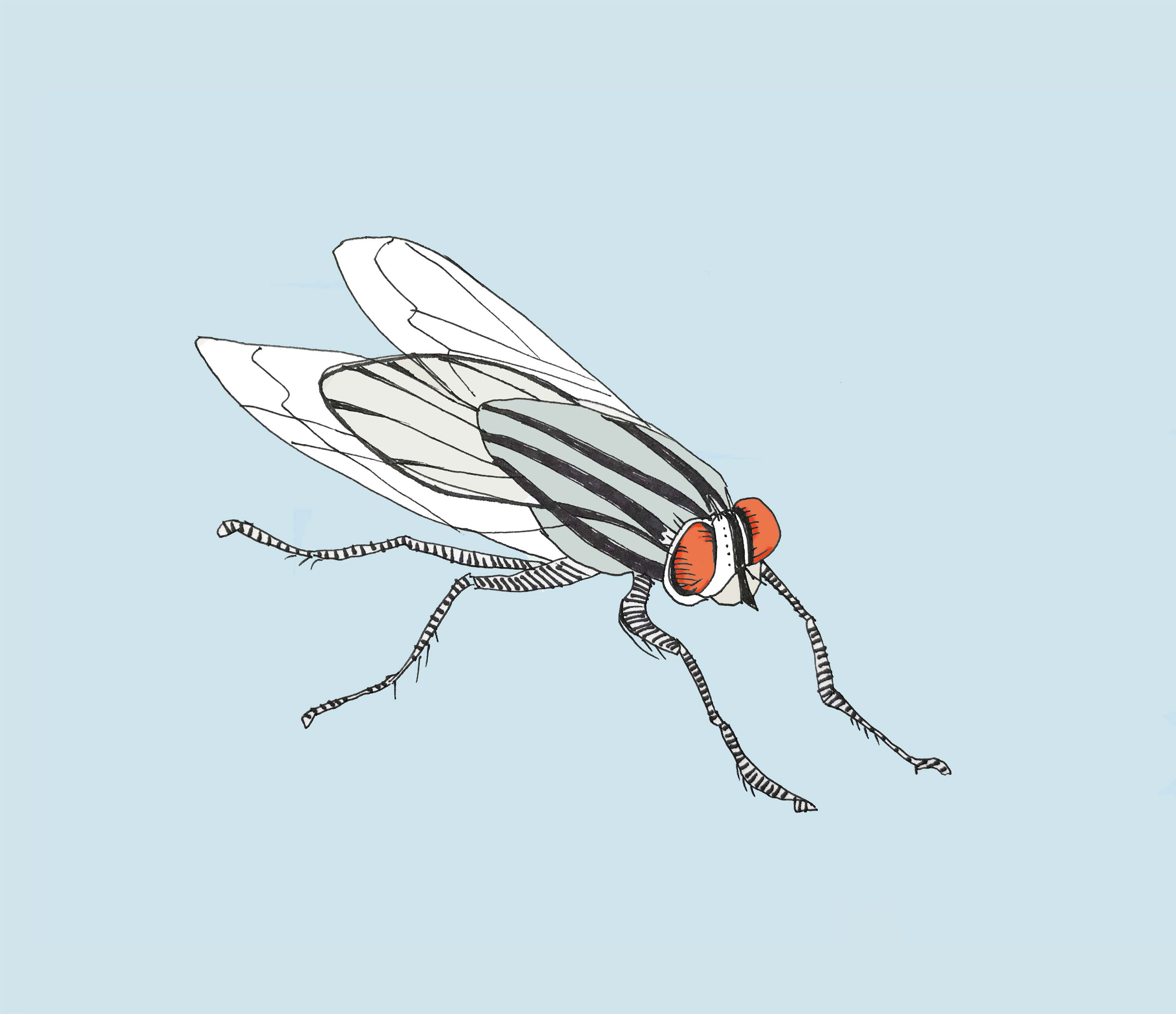 art every day number 255 fly 2 insect tiny infuriating gross